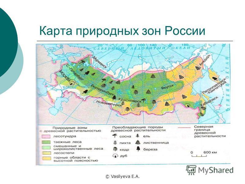 © Vasilyeva E.A. Карта природных зон России
