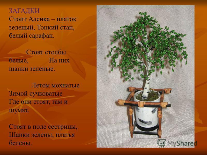 Проект «Сезонные изменения в жизни растений»