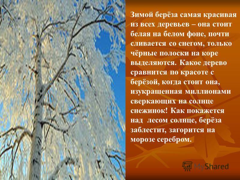 БЕРЕЗА ЗИМОЙ