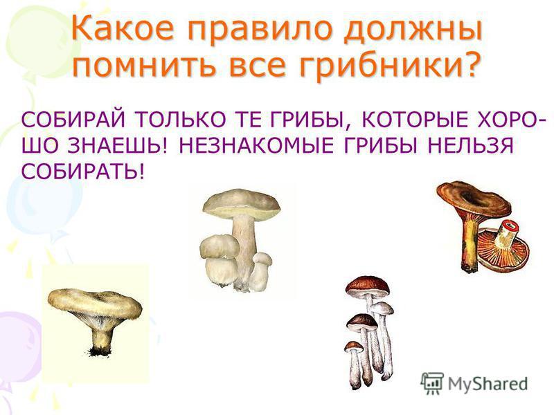 Какое правило должны помнить все грибники? СОБИРАЙ ТОЛЬКО ТЕ ГРИБЫ, КОТОРЫЕ ХОРО- ШО ЗНАЕШЬ! НЕЗНАКОМЫЕ ГРИБЫ НЕЛЬЗЯ СОБИРАТЬ!