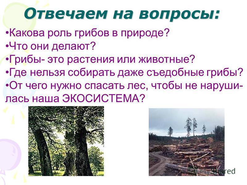 Отвечаем на вопросы: Какова роль грибов в природе? Что они делают? Грибы- это растения или животные? Где нельзя собирать даже съедобные грибы? От чего нужно спасать лес, чтобы не нарушилась наша ЭКОСИСТЕМА?