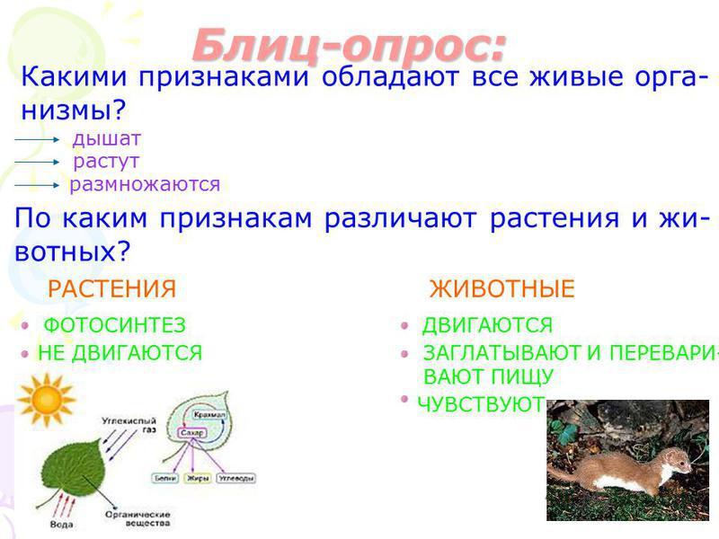 Блиц-опрос: Какими признаками обладают все живые организмы? дышат растут размножаются По каким признакам различают растения и животных? РАСТЕНИЯЖИВОТНЫЕ ФОТОСИНТЕЗ НЕ ДВИГАЮТСЯ ДВИГАЮТСЯ ЗАГЛАТЫВАЮТ И ПЕРЕВАРИ- ВАЮТ ПИЩУ ЧУВСТВУЮТ