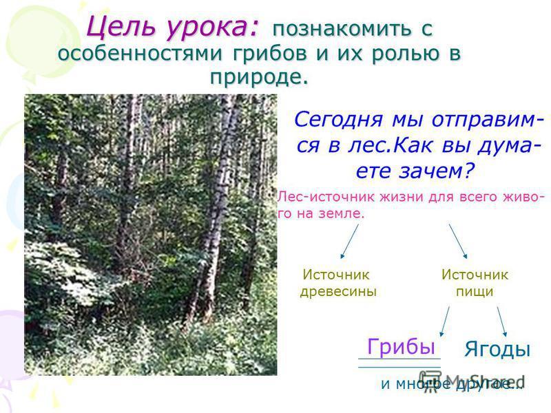 Цель урока: познакомить с особенностями грибов и их ролью в природе. Сегодня мы отправим- ся в лес.Как вы думаете зачем? Лес-источник жизни для всего живо- го на земле. Источник древесины Источник пищи Грибы Ягоды и многое другое…