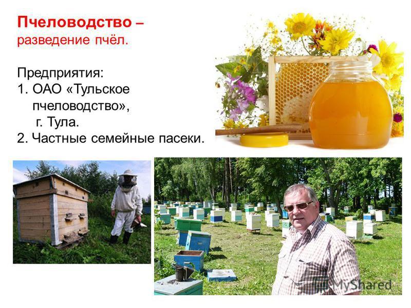 Пчеловодство – разведение пчёл. Предприятия: 1.ОАО «Тульское пчеловодство», г. Тула. 2. Частные семейные пасеки.