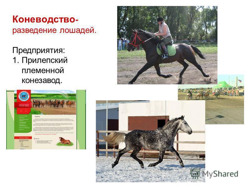 Коневодство - разведение лошадей. Предприятия: 1.Прилепский племенной конезавод.