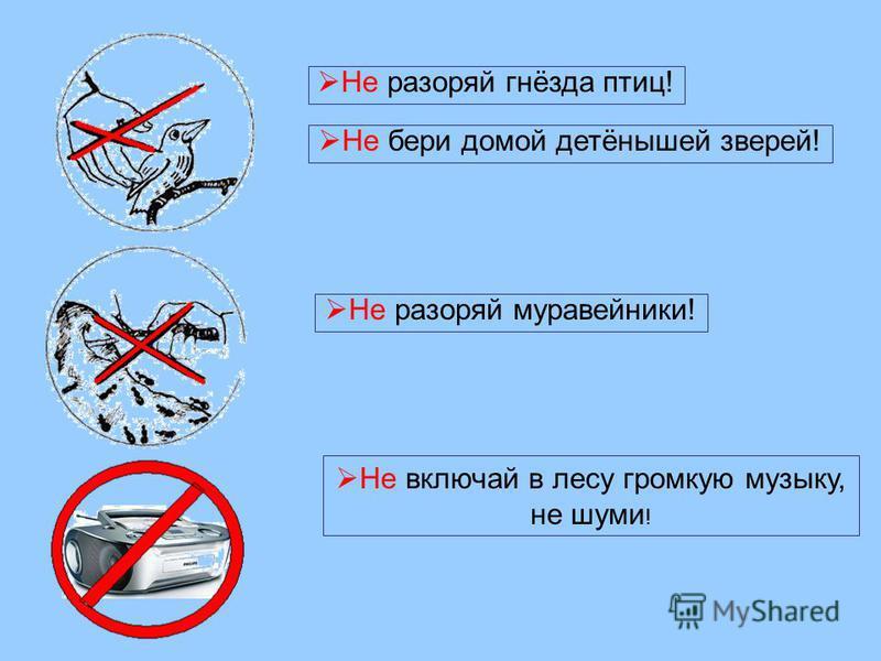 Не разоряй муравейники! Не разоряй гнёзда птиц! Не бери домой детёнышей зверей! Не включай в лесу громкую музыку, не шуми !