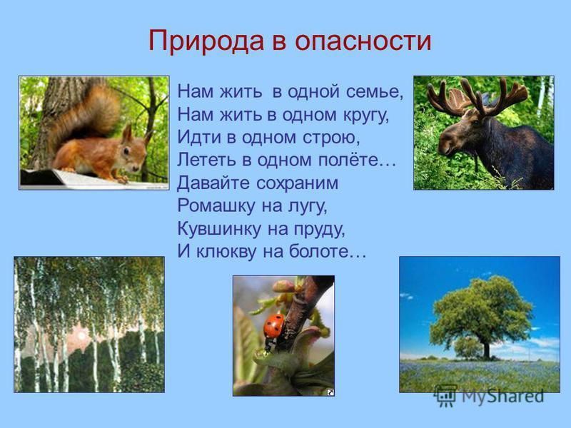Природа в опасности Нам жить в одной семье, Нам жить в одном кругу, Идти в одном строю, Лететь в одном полёте… Давайте сохраним Ромашку на лугу, Кувшинку на пруду, И клюкву на болоте…