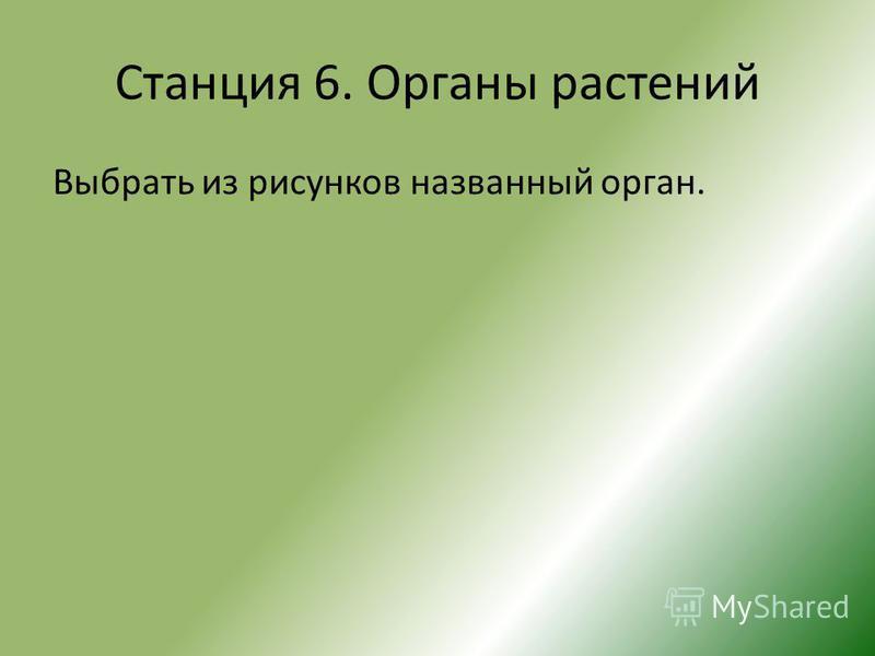 Станция 6. Органы растений Выбрать из рисунков названный орган.