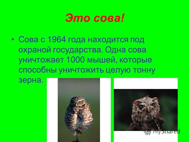 Это сова! Сова с 1964 года находится под охраной государства. Одна сова уничтожает 1000 мышей, которые способны уничтожить целую тонну зерна.