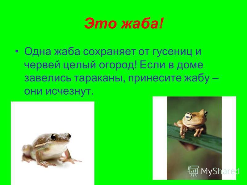 Это жаба! Одна жаба сохраняет от гусениц и червей целый огород! Если в доме завелись тараканы, принесите жабу – они исчезнут.