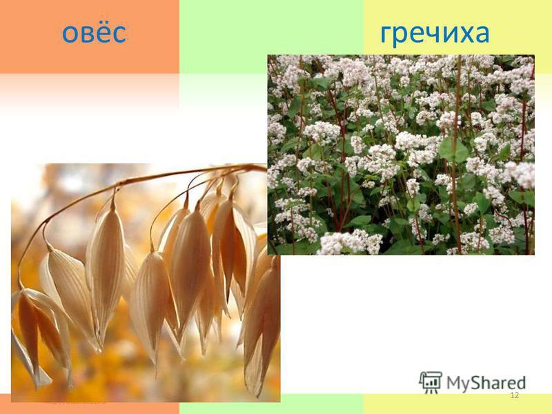 овёс гречиха 19.03.201512