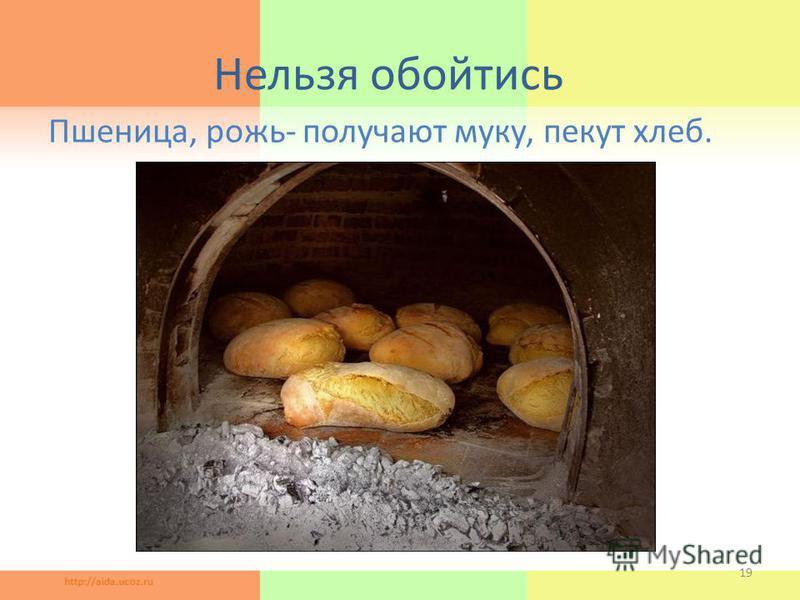 Нельзя обойтись Пшеница, рожь- получают муку, пекут хлеб. 19