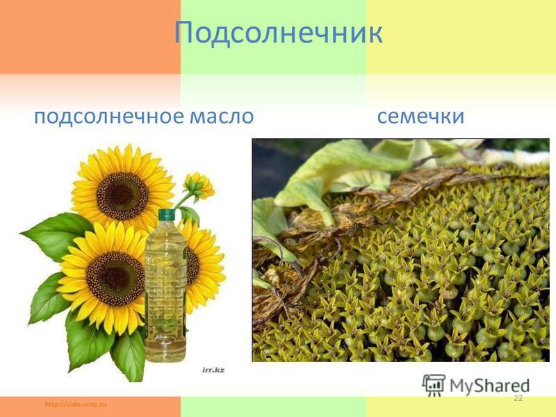 Подсолнечник подсолнечное масло семечки 22