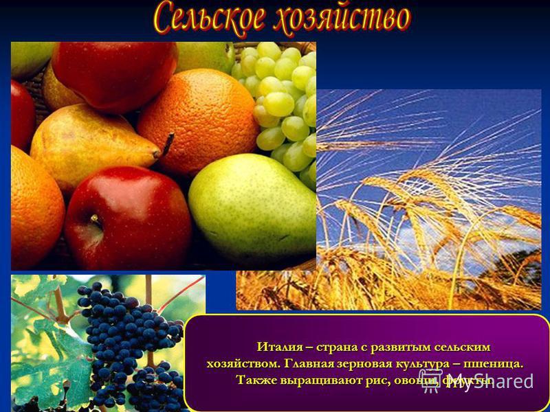 Италия – страна с развитым сельским хозяйством. Главная зерновая культура – пшеница. Также выращивают рис, овощи, фрукты.