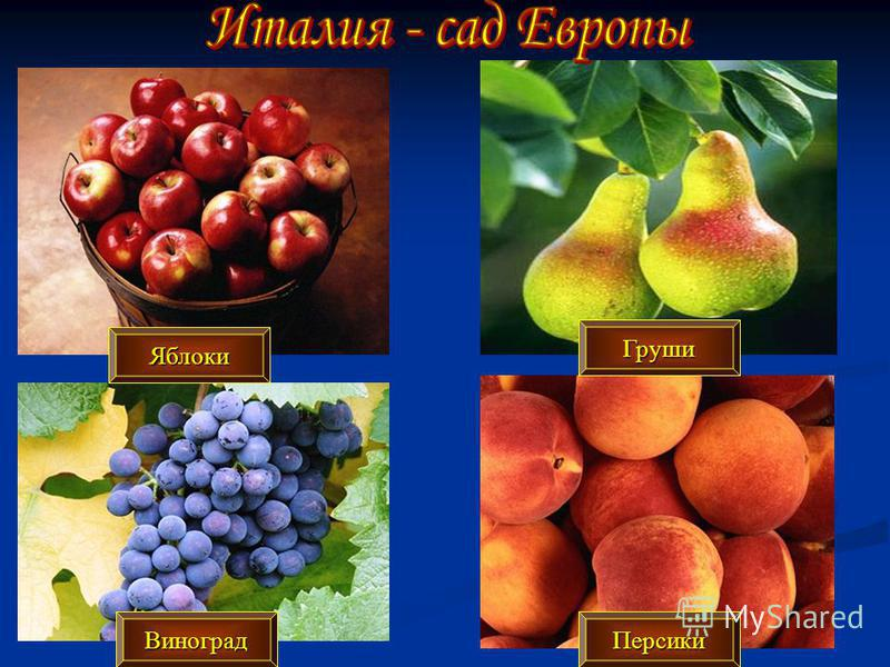 Яблоки Груши Виноград Персики