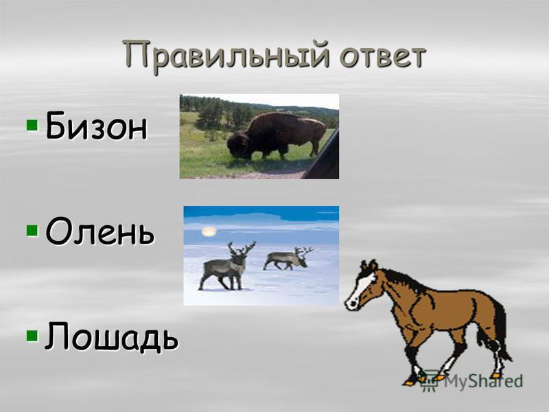 Правильный ответ Бизон Бизон Олень Олень Лошадь Лошадь