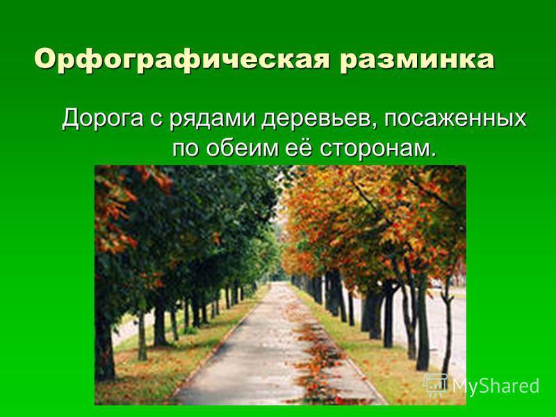 Орфографическая разминка Дорога с рядами деревьев, посаженных по обеим её сторонам.