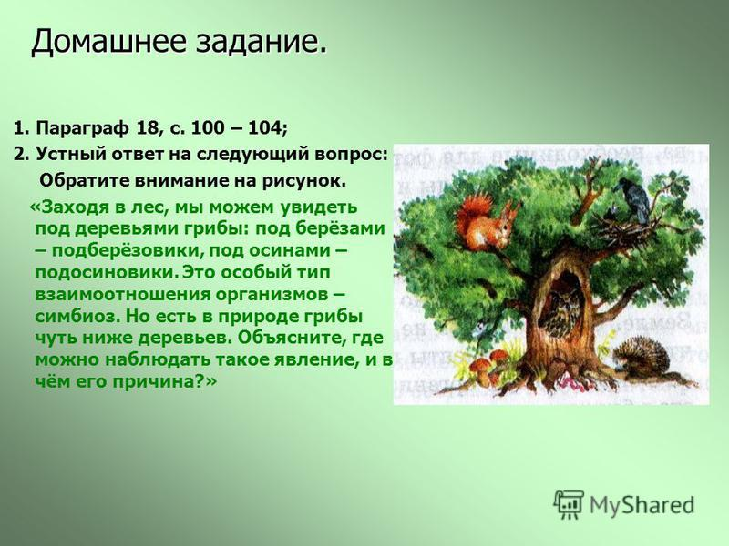 Домашнее задание. 1. Параграф 18, с. 100 – 104; 2. Устный ответ на следующий вопрос: Обратите внимание на рисунок. «Заходя в лес, мы можем увидеть под деревьями грибы: под берёзами – подберёзовики, под осинами – подосиновики. Это особый тип взаимоотн