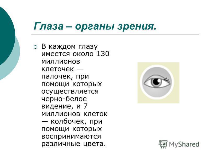 Глаза – органы зрения. В каждом глазу имеется около 130 миллионов клеточек палочек, при помощи которых осуществляется черно-белое видение, и 7 миллионов клеток колбочек, при помощи которых воспринимаются различные цвета.