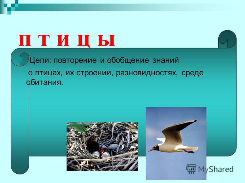 п т и ц ы Цели: повторение и обобщение знаний о птицах, их строении, разновидностях, среде обитания.