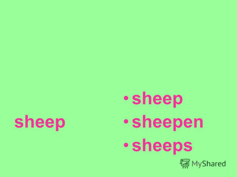 sheep sheepen sheeps