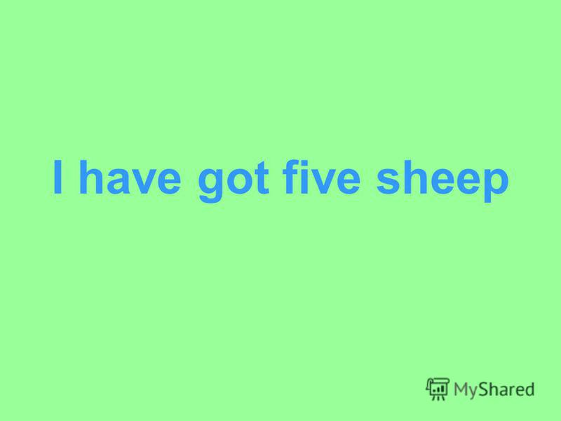 I have got five sheep