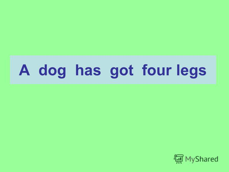 A dog has got four legs