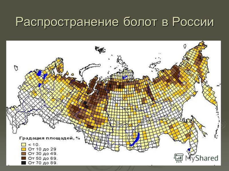 Распространение болот в России