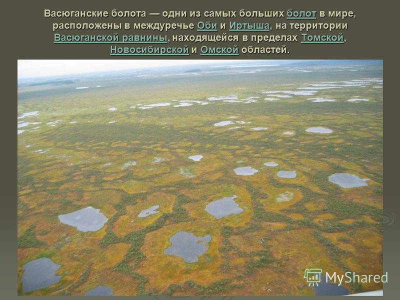 Васюганские болота одни из самых больших болот в мире, расположены в междуречье Оби и Иртыша, на территории Васюганской равнины, находящейся в пределах Томской, Новосибирской и Омской областей. болот Оби Иртыша Васюганской равнины Томской Новосибирск