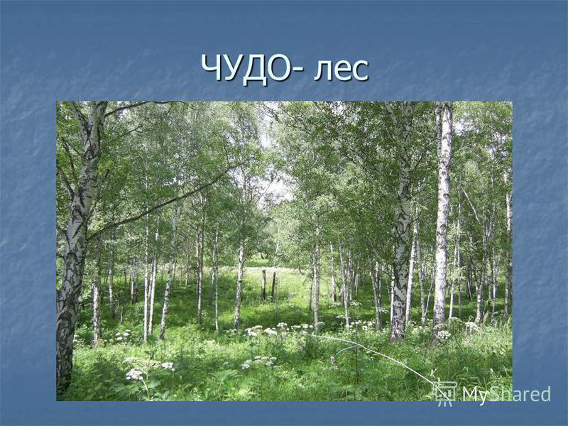 ЧУДО- лес