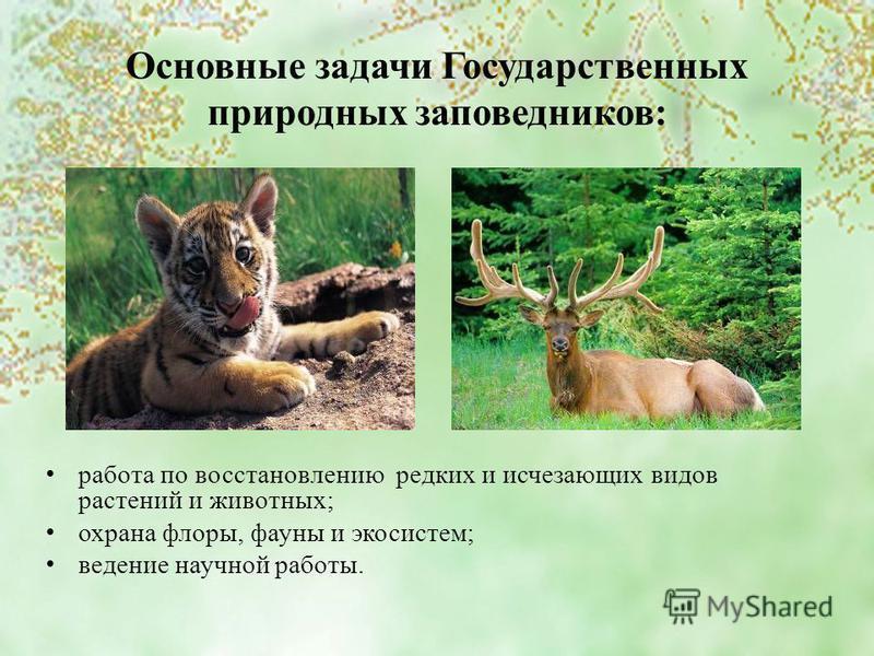 Основные задачи Государственных природных заповедников: работа по восстановлению редких и исчезающих видов растений и животных; охрана флоры, фауны и экосистем; ведение научной работы.