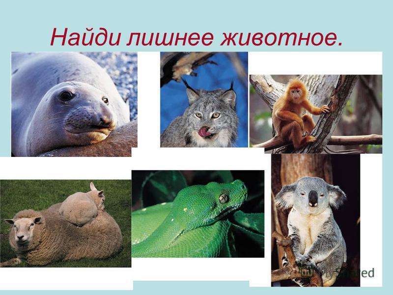 Найди лишнее животное.