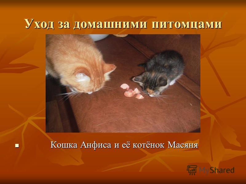 Уход за домашними питомцами Кошка Анфиса и её котёнок Масяня Кошка Анфиса и её котёнок Масяня