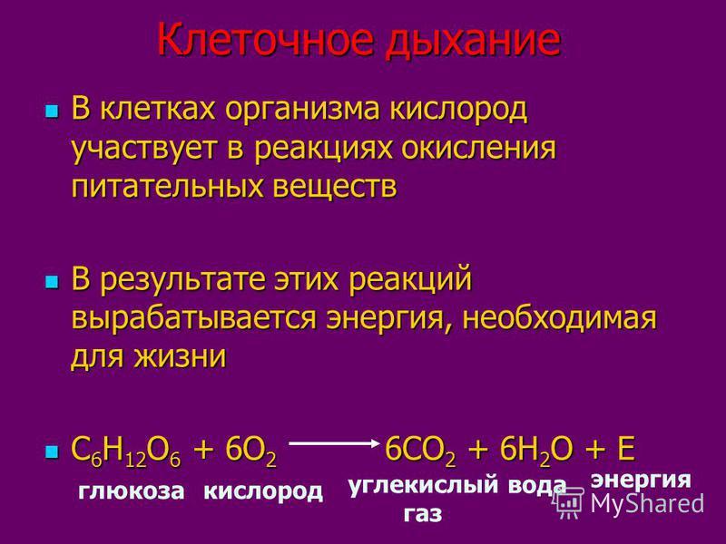 Клеточное дыхание В клетках организма кислород участвует в реакциях окисления питательных веществ В клетках организма кислород участвует в реакциях окисления питательных веществ В результате этих реакций вырабатывается энергия, необходимая для жизни