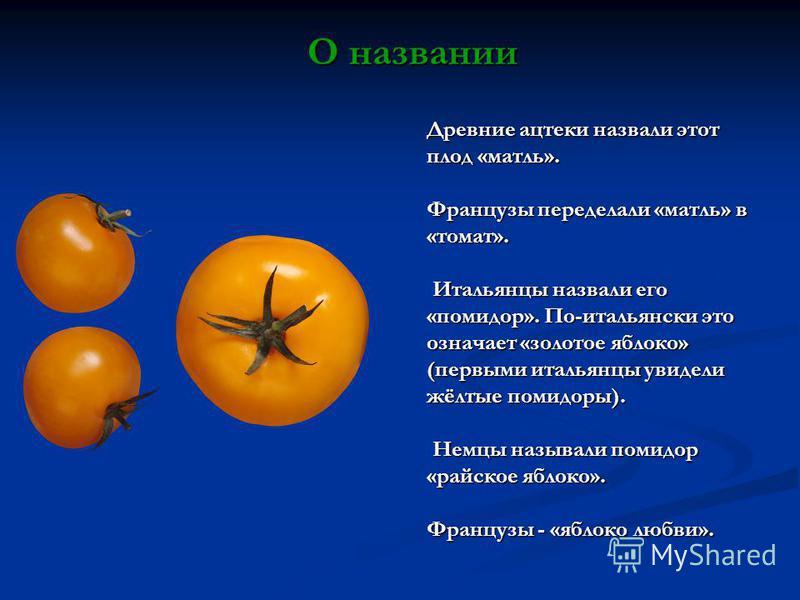 Древние ацтеки назвали этот плод «матль». Французы переделали «матль» в «томат». Итальянцы назвали его «помидор». По-итальянски это означает «золотое яблоко» (первыми итальянцы увидели жёлтые помидоры). Итальянцы назвали его «помидор». По-итальянски