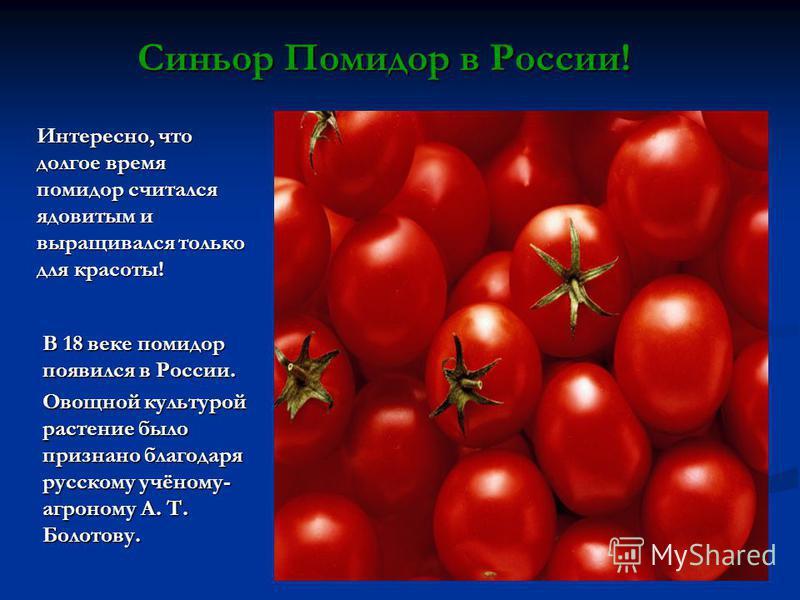 Синьор Помидор в России! В 18 веке помидор появился в России. Овощной культурой растение было признано благодаря русскому учёному- агроному А. Т. Болотову. Интересно, что долгое время помидор считался ядовитым и выращивался только для красоты!