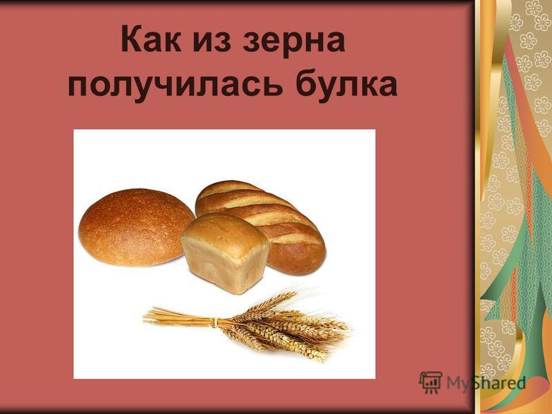 Как из зерна получилась булка