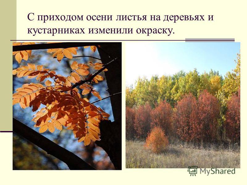 Изменение в живой природе осенью.