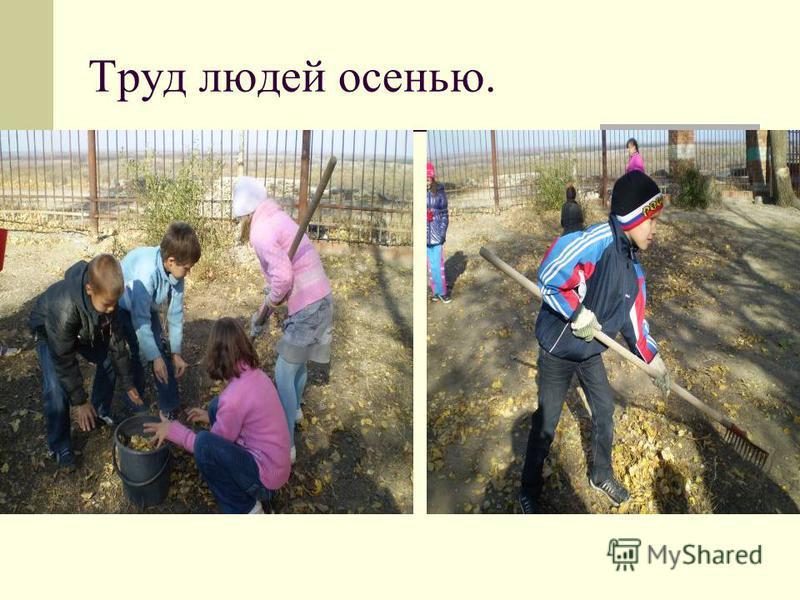 Домашние животные в отличие от диких сами не запасают корм на зиму и не строят себе убежищ.