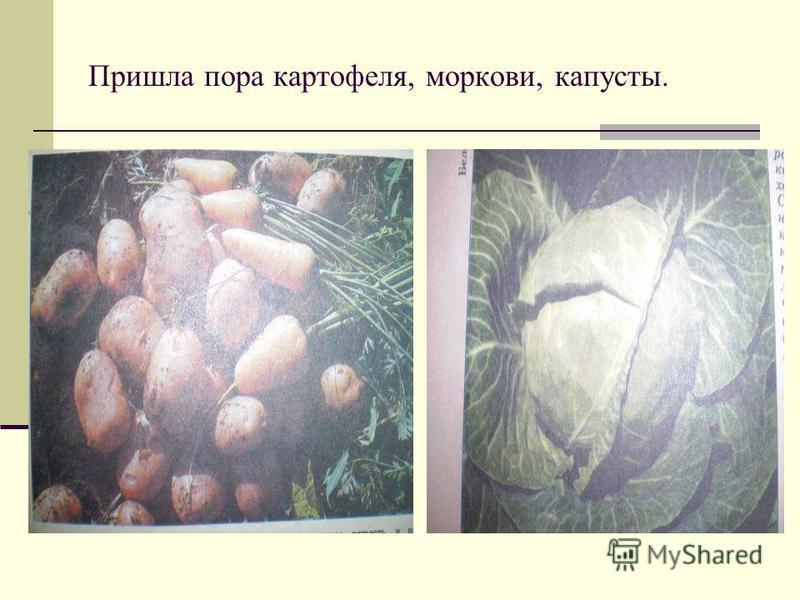 К осени у растений созревают плоды, виноград, облепиха, шиповник.