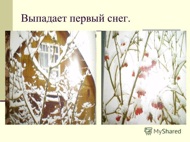 На улице лёгкий мороз. На почве и растениях иней.
