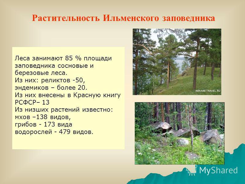 Леса занимают 85 % площади заповедника сосновые и березовые леса. Из них: реликтов -50, эндемиков – более 20. Из них внесены в Красную книгу РСФСР– 13 Из низших растений известно: мхов –138 видов, грибов - 173 вида водорослей - 479 видов. Растительно