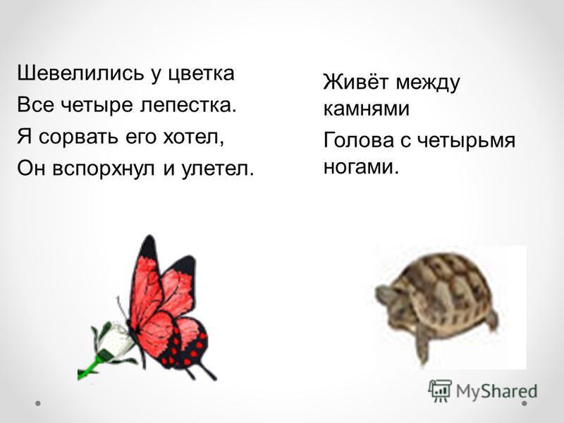 Живёт между камнями Голова c четырьмя ногами. Шевелились у цветка Все четыре лепестка. Я сорвать его хотел, Он вспорхнул и улетел.