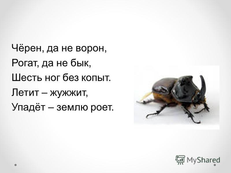 Чёрен, да не ворон, Рогат, да не бык, Шесть ног без копыт. Летит – жужжит, Упадёт – землю роет.