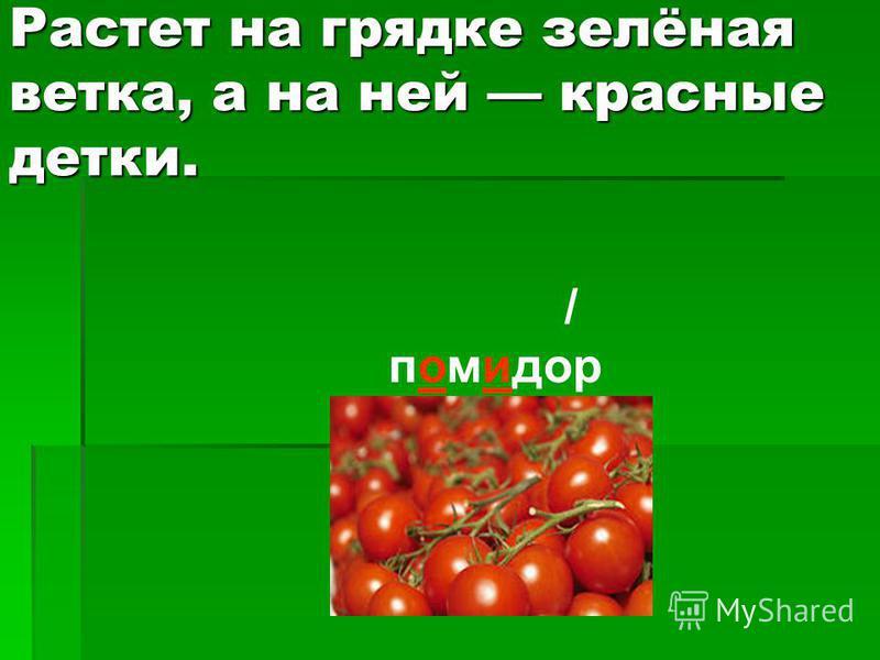 Растет на грядке зелёная ветка, а на ней красные детки. / помидор