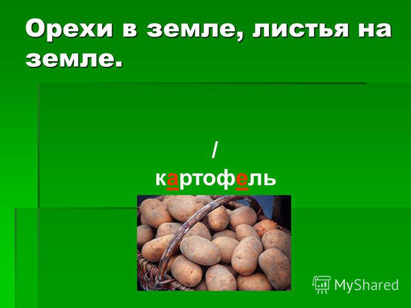 Орехи в земле, листья на земле. / картофель