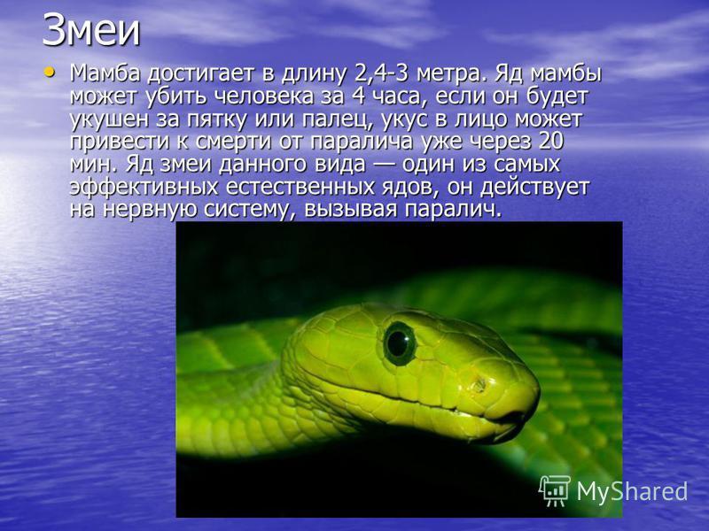 Змеи Мамба достигает в длину 2,4-3 метра. Яд мамбы может убить человека за 4 часа, если он будет укушен за пятку или палец, укус в лицо может привести к смерти от паралича уже через 20 мин. Яд змеи данного вида один из самых эффективных естественных