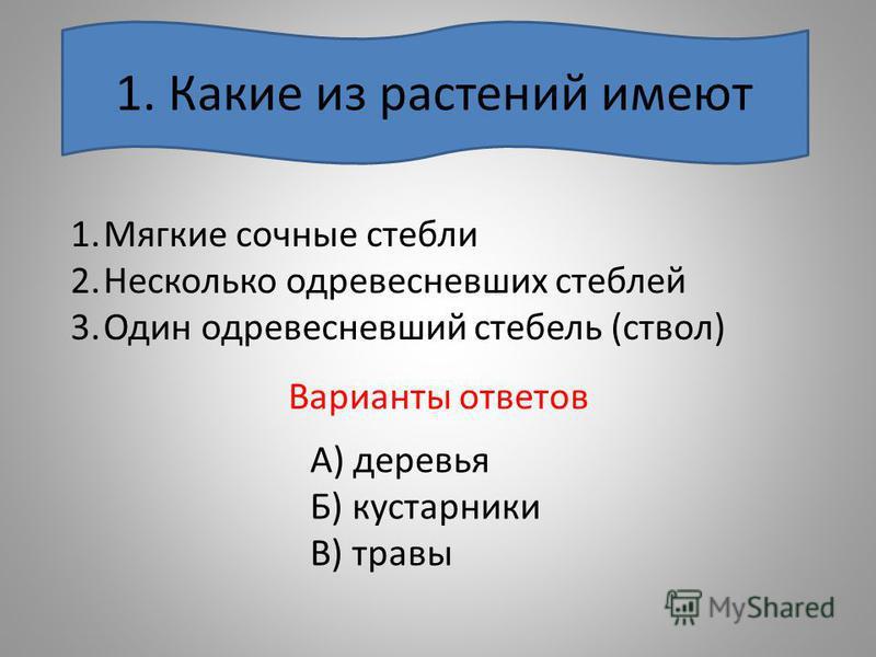 Варианты ответов 1. Какие из растений имеют 1. Мягкие сочные стебли 2. Несколько одревесневших стеблей 3. Один одревесневший стебель (ствол) А) деревья Б) кустарники В) травы