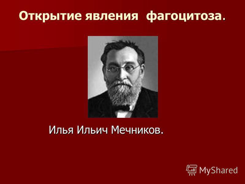 . Открытие явления фагоцитоза. Илья Ильич Мечников. Илья Ильич Мечников.