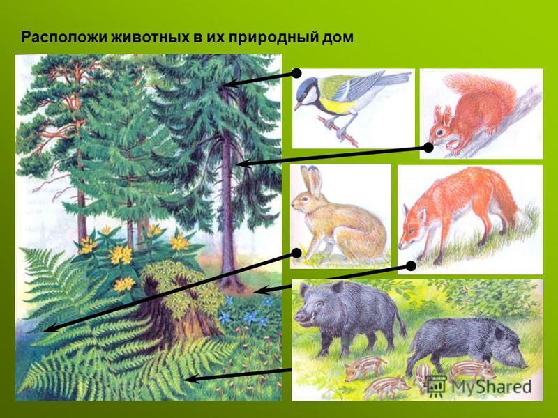 Расположи животных в их природный дом